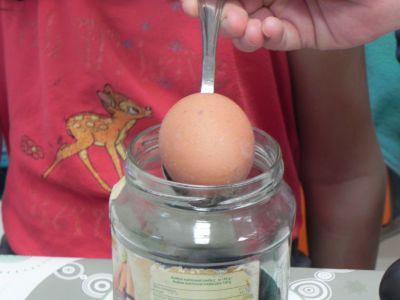 Huevos De Colores 0006